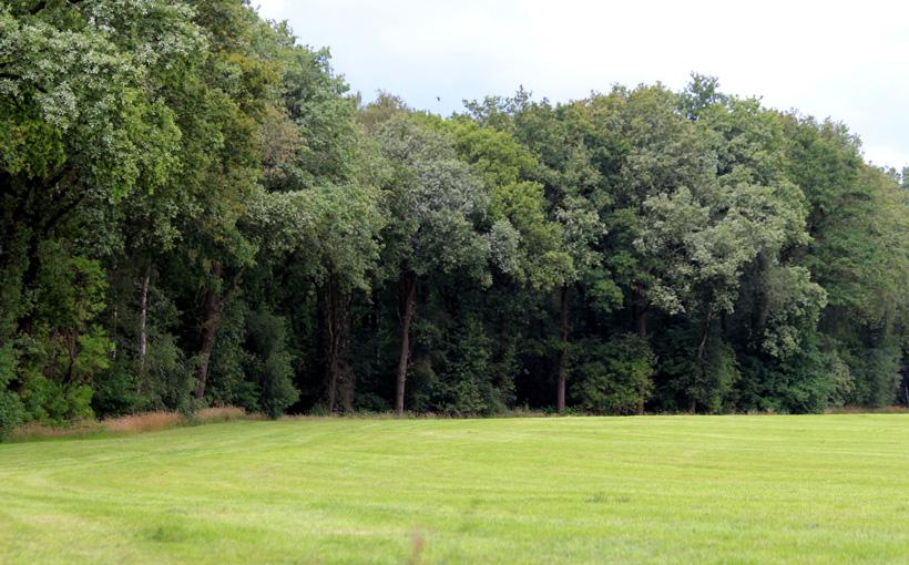 Onderdeel van gebiedsvisie Maasgaard: ecologische verbinding Oude Maasarm Geysteren